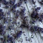 Lavendel-Thymian-Butter